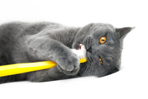 Informácie o stráženie mačiek  66456dd19ba