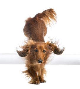 Informácie o stráženie psov  12ef22f070e