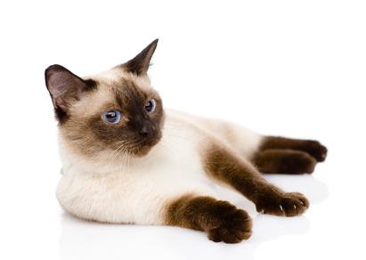 ... u nás doma alebo dochádzanie k vám domov a stráženie mačiek či ich  navštevovanie tam. Pre mačky je totiž lepšie c47d77d758a